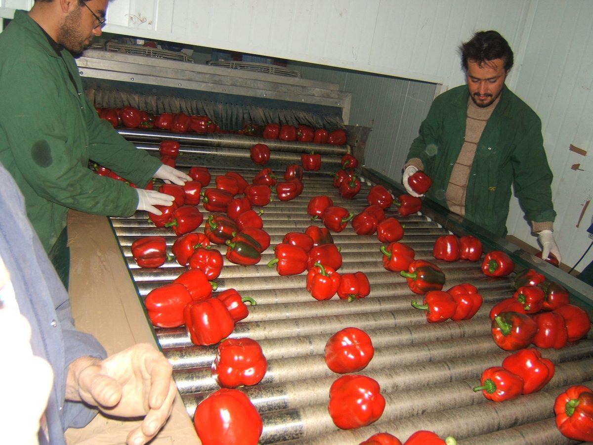 מסועים לתעשיית המזון