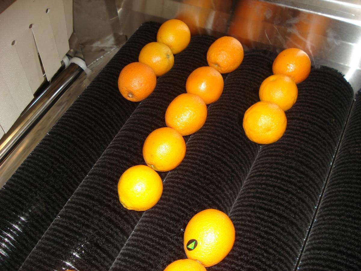 מסוע תפוזים
